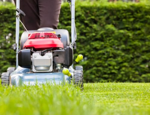 Spring has Sprung- Time for a Property Maintenance Plan!